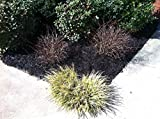 9,600 Sq Feet Black Forest Mulch Color Concentrate