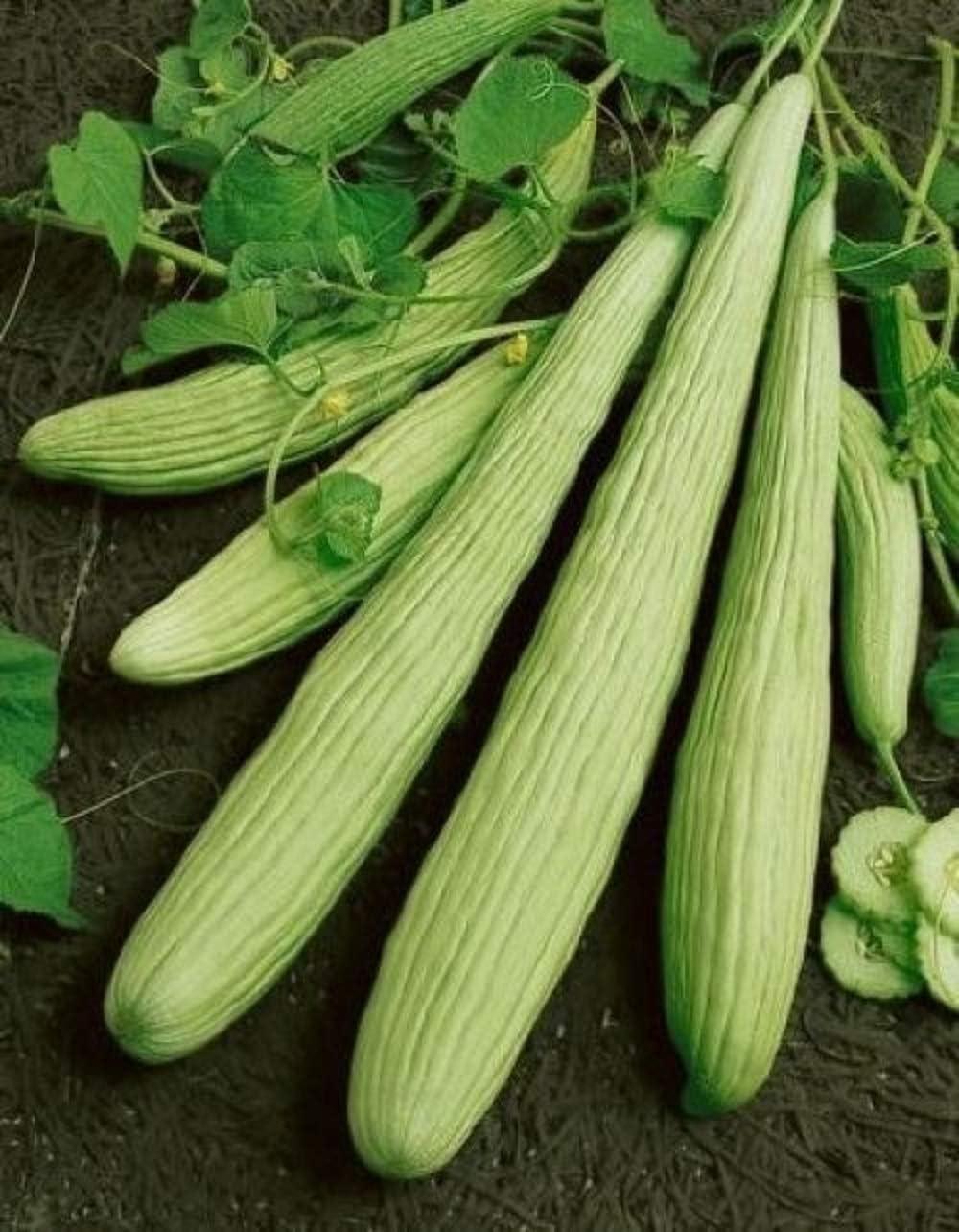 David's Garden Seeds Cucumber Slicing Armenian Yard Long SL9181 (Green) 25 Non-GMO, Heirloom Seeds