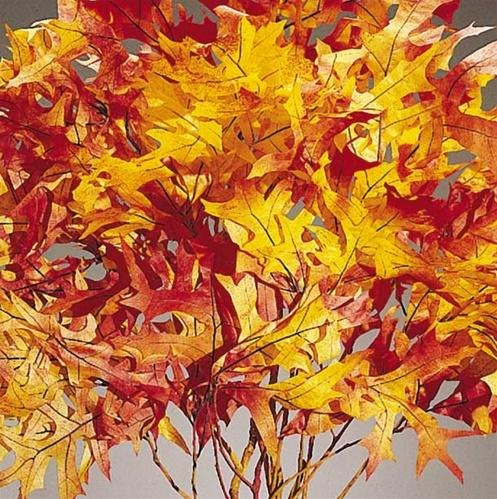 Dried Autumn Oak Leaves ( 1 lb Preserved leaves ) 25 Pound Case B071KRSWDX  25 Pound Case