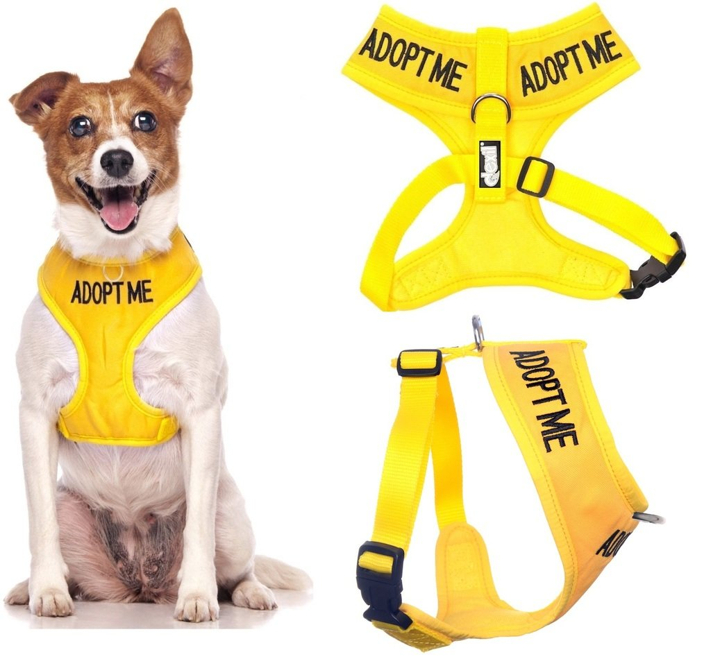 ''ADOPT ME '' Yellow Color Coded Small Vest Dog Harness (New Home Needed) Donate To Your Local Charity!
