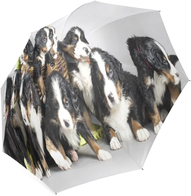 Custom Cute Bernese mountain dog puppies Compact Travel Windproof Rainproof Foldable Umbrella