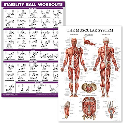 QuickFit Exercise Workouts Muscular Anatomy product image
