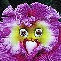100Pcs Face Orchid Seeds Rarest Baby Perennial Flower Professional Garden Decor