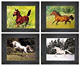 Arabian Mare And White Horse Rearing Wild Animal Four Rustic Framed 8x10 Set Pictures Wall Decor Art Print Posters