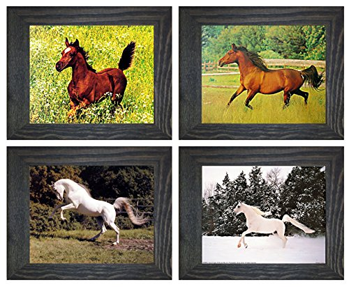 Arabian Mare And White Horse Rearing Wild Animal Four Rustic Framed 8x10 Set Pictures Wall Decor Art Print Posters by Impact Posters Gallery