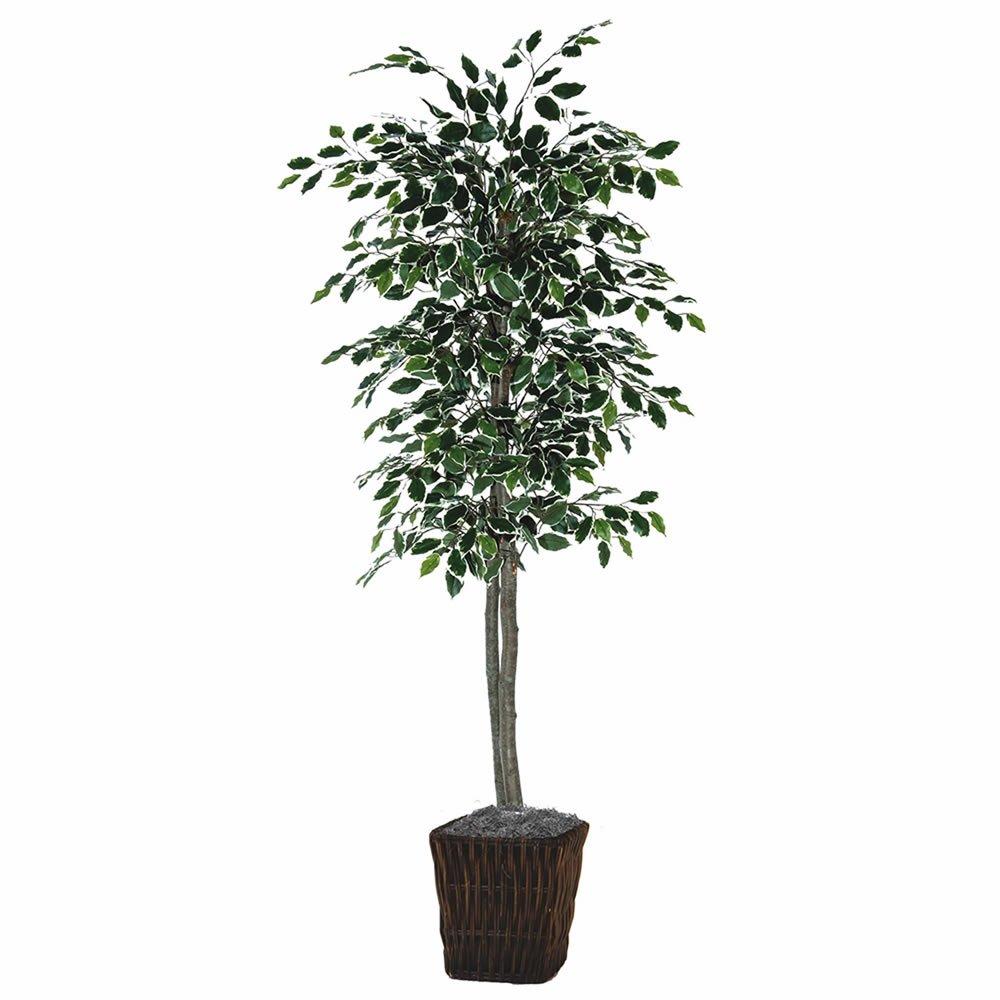 Vickerman TEC0260-0414 Variegated Focus Tree in Square Willow Tree, 6'