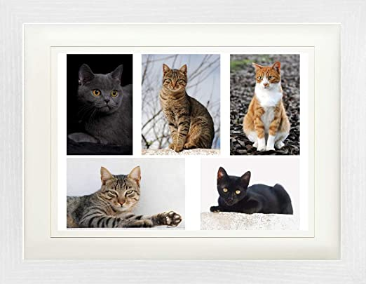 1art1 Gatos - Gatos Bonitos, Collage Póster De Colección Enmarcado ...