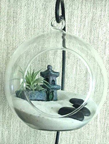 Amazon Com Diy Zen Garden Air Plant Terrarium Handmade