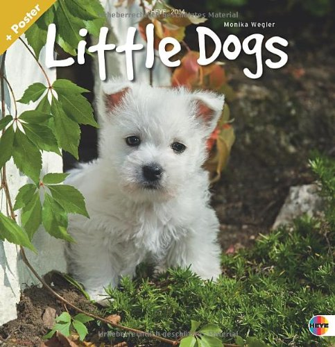 Little Dogs Broschurkalender 2014