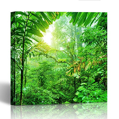 (Emvency Painting Wall Art Canvas Print Square 12x12 Inches Fresh Green Rainforest Summer Time National Park of Costa Rica Wonderful Wild Decoration Wooden Frame)