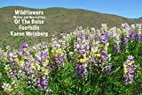 Wildflowers of the Boise Foothills by Karen Weinberg front cover
