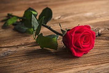 Rosa Eterna Preservada con Tallo Presentada en Estuche de ...