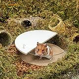 Niteangel Small Animal Sand-Bath Box: - Acrylic