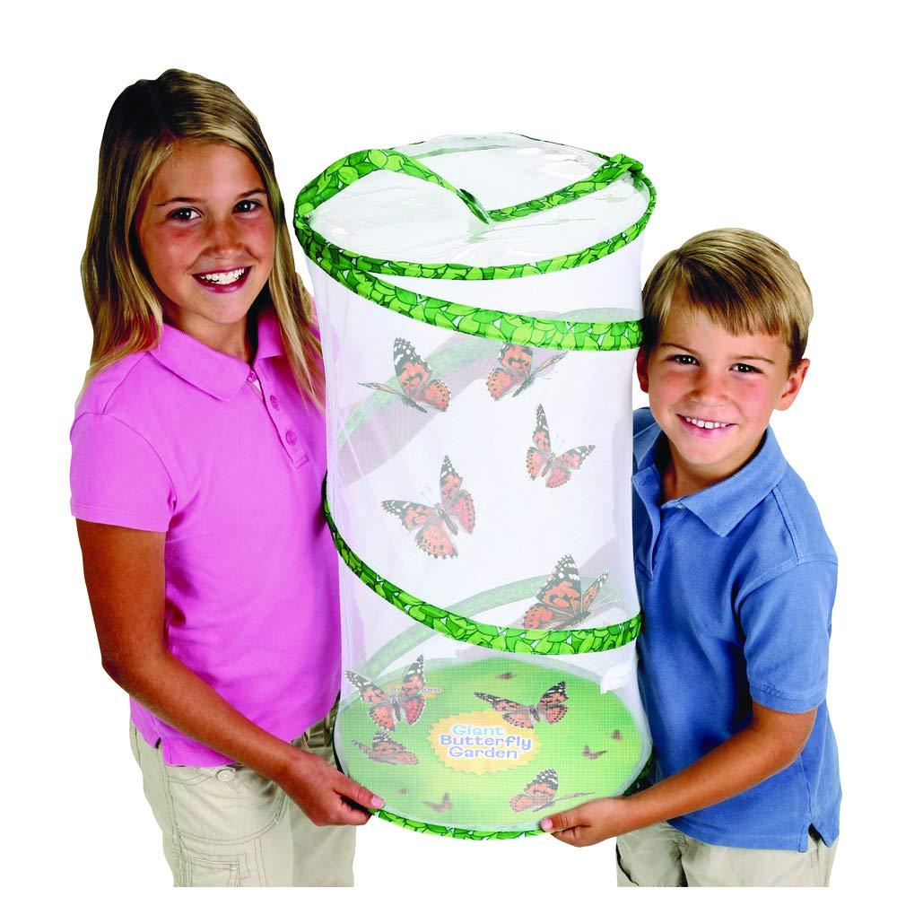 Classroom Butterfly School Kit  - 33 LIVE Caterpillars