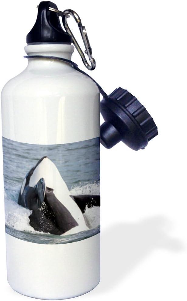 3drose Orca Whale Breaching。スポーツウォーターボトル、21オンス、ホワイト