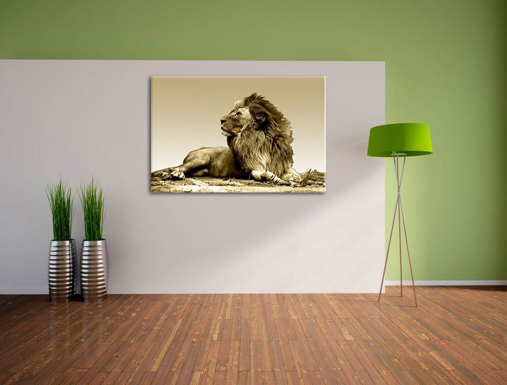 1M//30x30 cm//5269 Babylöwe Löwe Bild auf Leinwand