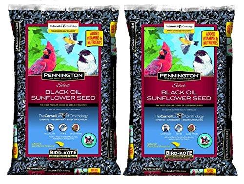Pennington Select Black Oil Sunflower Seed Wild Bird Feed, 40 lbs (Pack of 2) by Pennington