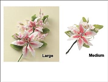 Rosafarbenes Rubrum Lilie Zucker Set Blumenstander Aus Der Serie