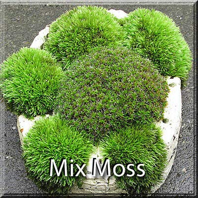 Premium Super Mix Fresh Live Moss Assortment Terrarium Fairy Garden Vivarium : Garden & Outdoor