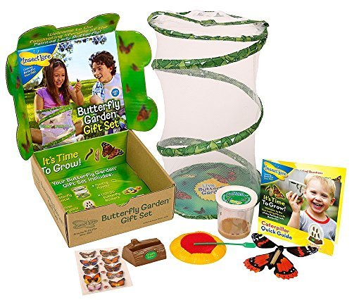 Butterfly Garden Gift Set with Live Cup of Caterpillars by I