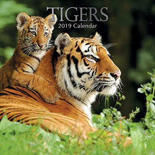 Tiger 2018 Calendar - 2019 Wall Calendar - Tigers Calendar, 12 x 12 Inch Monthly View, 16-Month, Jungle Animals Theme, Includes 180 Reminder Stickers