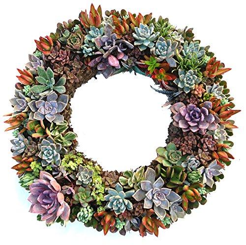 19 Inch Wreath - 5