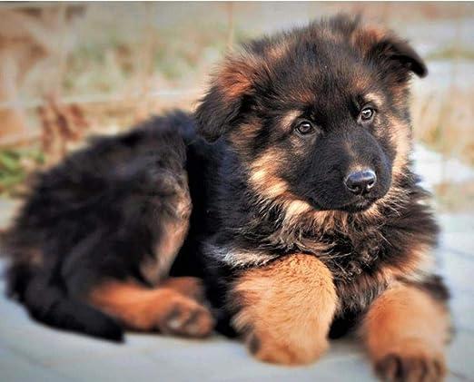 Juego de pastor alemán cachorro de perro mascota Pintura de Diamante 5D Diy  ronda de diamantes bordado Mosaic gift Niño Punto de cruz 40x50cm:  Amazon.es: Hogar