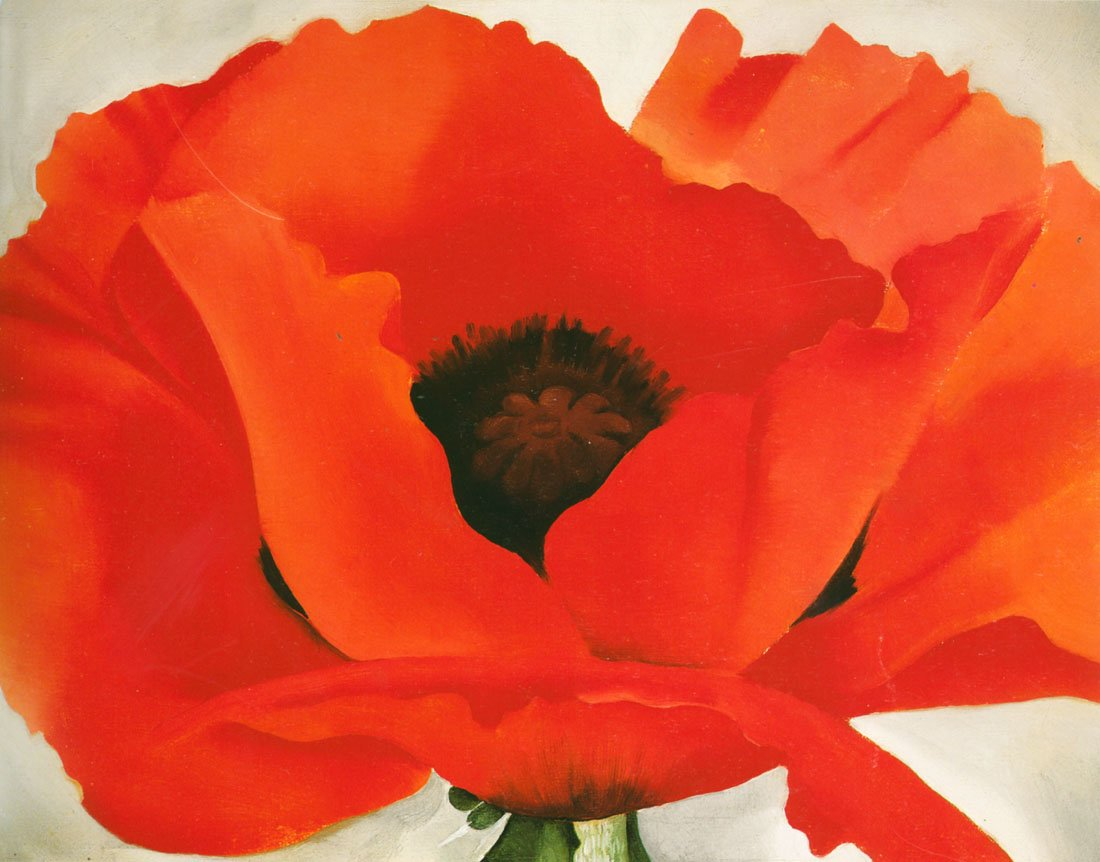 amazon com red poppy o u0027keeffe canvas or wall art print posters