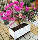 INCHANT Durable Plastic Vegetable Raised Garden Bed Outdoor Rooftop Balcony Grow Flowers Elevated garden Planter bed Planting box Patio Backyard Planter With Water Storage Plate and Universal Wheels
