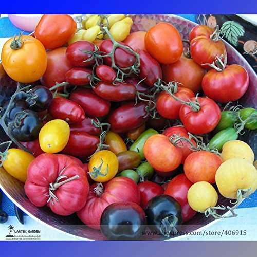 pinkdoseâ ® 2018vente chaude cimelio mélangé Vinson watts tomate bio + graines hybrides, boîte professionnelle, 100/pack, comestible fruits savoureux e3158