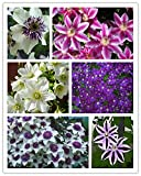100 Pcs / Pack Clematis Hybridas, Clematis Seed,clematis Flowers - Mix Color