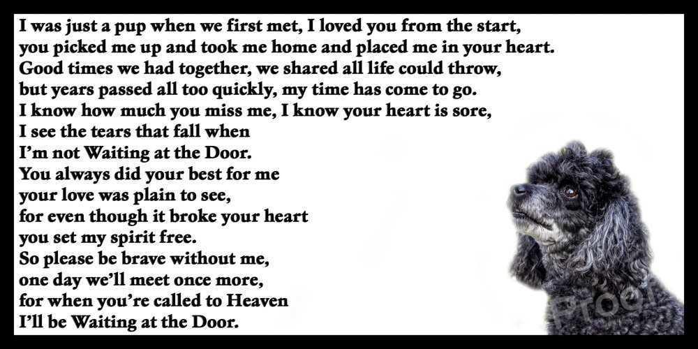 Poodle Memorial dog bereavement pet loss Flexible Fridge Magnet - Waiting at the Door CountryStyle Photography