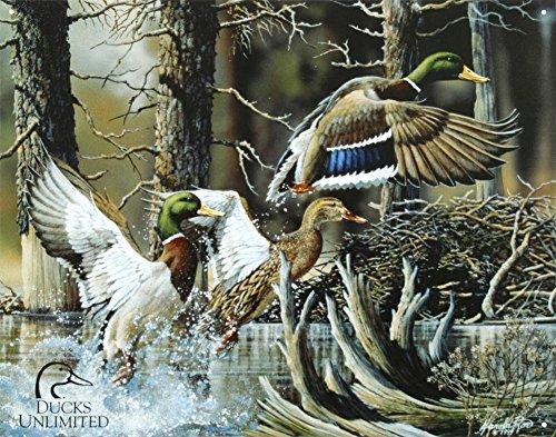 Duck Prints Amazon Com