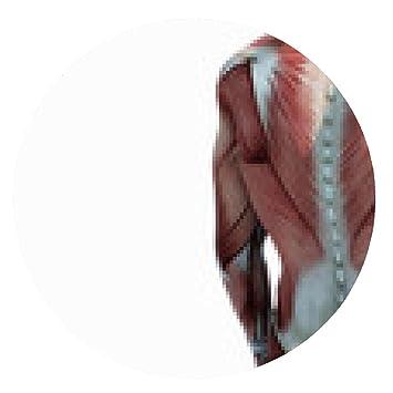 Mousepad Oberkörper Anatomie Muskeln - rund - 20cm: Amazon.de ...