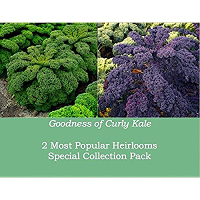 Curly Kale 'Scarlet' And 'Kapral' (Brassica Oleracea L.) Vegetable Plant Heirloom Seeds, Twin Pack : Garden & Outdoor