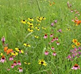 Wildflower Garden and Landscaping Mix (Mix 137), 1 PLS Pound, True Native Seed