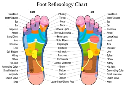 reflexology labeled foot chart diagram holistic health advertising  educational large a1 poster 33in x 23in: amazon co uk: kitchen & home