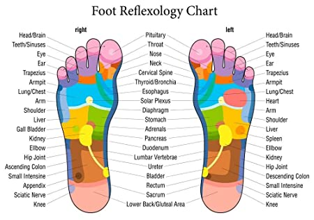 Reflexology labeled foot chart diagram holistic health advertising reflexology labeled foot chart diagram holistic health advertising educational large a2 poster 23in x 16in ccuart Images