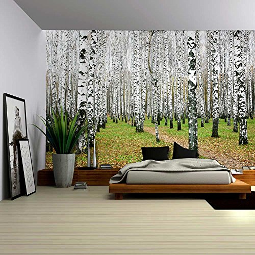 Wall26 - A Small Pathway in a Tall Brich Tree Forest - Wall Mural, Removable Sticker, Home Decor - 100x144 inches (Tree Brich)