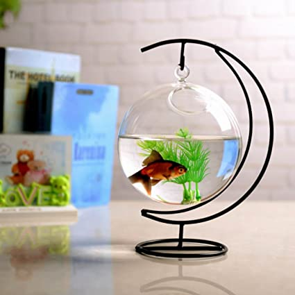Amazon Com Gmakerr Planters Flower Water Planter Hanging Clear