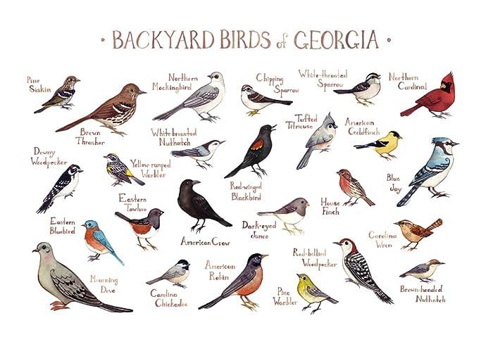 Charmant Backyard Birds Of Georgia Field Guide Art Print