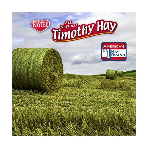 Kaytee Timothy Hay for Rabbits & Small Animals, Assorted Flavors, 24 oz Bag 3