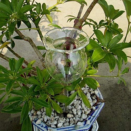 Glumes Plant Watering Bulbs Small Hand Blown Clear Glass Self Watering Aqua Globes Butterfly for Patio, Lawn, Garden Pot Planter Holiday Gardening Teachers Science Gifts & Unique Gifts