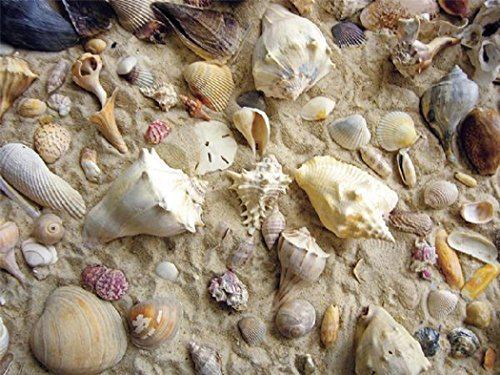 (Heritage Sandy Seashells Jigsaw Puzzle - 550 Pieces - She Sells Sea Shells)