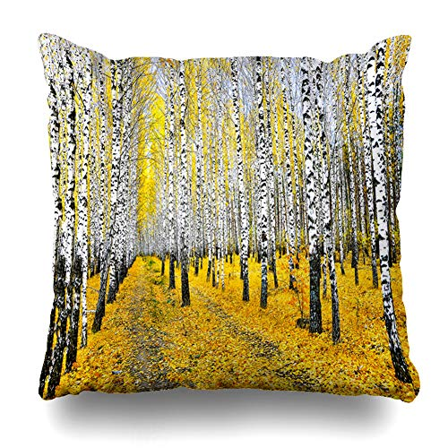 Ahawoso Throw Pillow Cover Square 20x20 October Orange Aspen Autumn Birch Tree Forest Road Plant Parks Red Trees Bark Forrest Black Design Pillowcase Home Decor Cushion Case