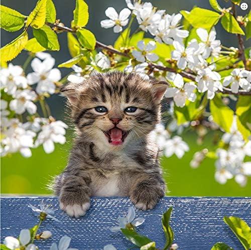 La kelnet microfibra toalla – Gatos – Gato Entre flores de cerezo: Amazon.es: Salud y cuidado personal
