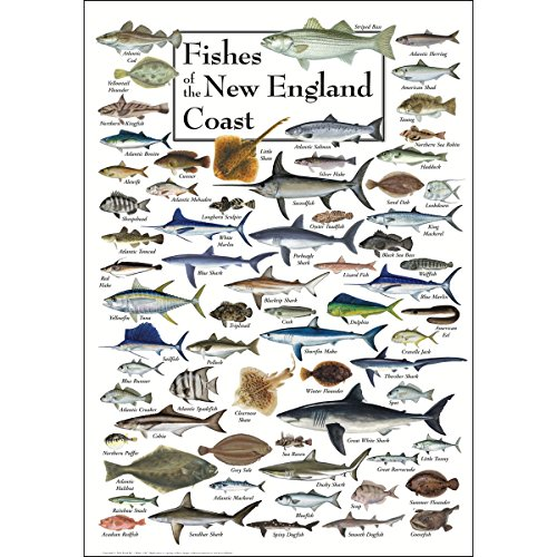 - Earth Sky & Water Poster - Fishes of the New England Coast