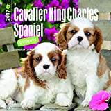 Cavalier King Charles Spaniel Puppies 2017 Mini 7x7 (Multilingual Edition)