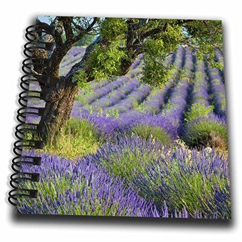 3dRose Danita Delimont - France - Tree in purple field of lavender, Valensole Plateau, Provence, France - Mini Notepad 4 x 4 inch (db_277366_3) ()