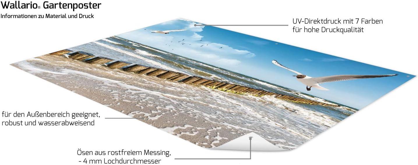 Fliegende M/öwe am Strand in Premiumqualit/ät Wallario Garten-Poster Outdoor-Poster f/ür den Au/ßeneinsatz geeignet Gr/ö/ße: 61 x 91,5 cm